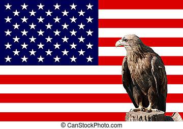 orzeł, in-front, amerykańska bandera