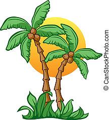 orzech kokosowy, wschód słońca