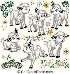 owca niemowlęcia, komplet, rysunek