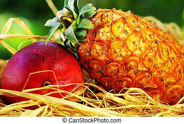 owoce, tropikalny, ananas, mangowiec, surowy