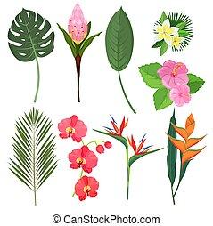 ozdoba, rośliny, wektor, egzotyczny, bukiety, polinezyjski, tropikalny, flowers., bali, kwiaty, ziołowy