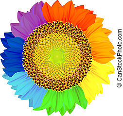 płatki, różny, rainbow., kolor, słonecznik
