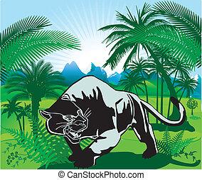 panter, dżungla