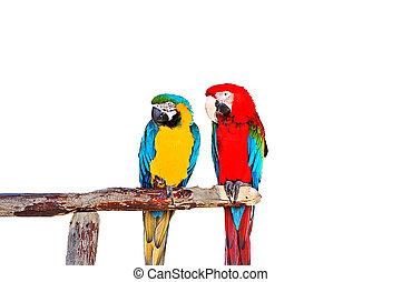 papugi, dwa