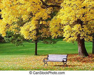park miasto, jesień