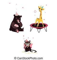 partia, żyrafa, urodziny, niedźwiedź, kot