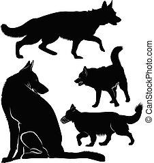 pasterz, komplet, niemiec, pies, sylwetka, psy
