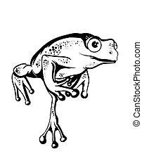 piękny, żaba
