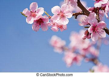 piękny, błękitny, sky., wiosna, jasny, kwiaty