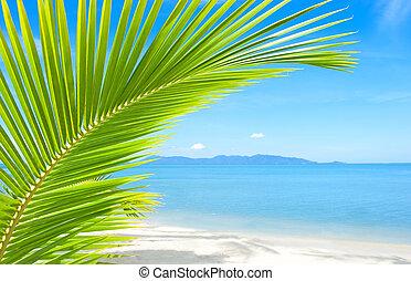 piękny, drzewo, tropikalny, piasek, dłoń plaża