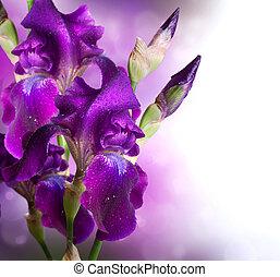 piękny, irys, kwiat, sztuka, fioletowe kwiecie, design.