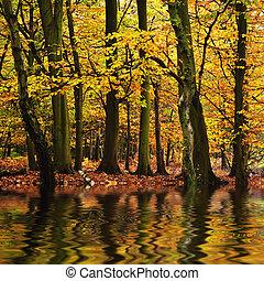 piękny, jesień, pora, upadek, odbijał się, n, woda kolor, las, wibrujący, krajobraz