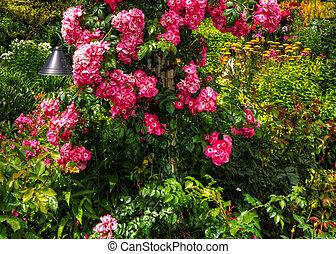 piękny, kwiat, hdr, ogród
