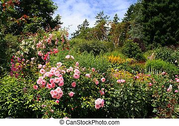 piękny, kwiat ogród