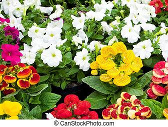 piękny, kwiaty, ogród