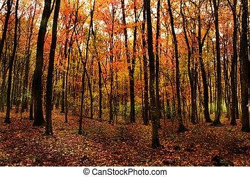piękny, las