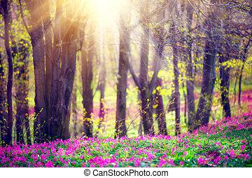 piękny, natura, drzewa., rozkwiecony, park, trawa, zielony, wiosna, dzikie kwiecie, krajobraz