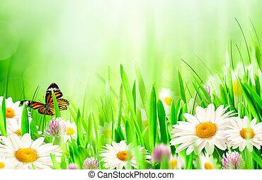 piękny, skoczcie kwiecie, chamomile, tła