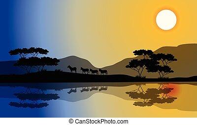 piękny, sylwetka, zebra, riverbank