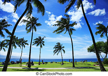 piękny, tropikalna plaża, hawaje