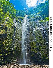piękny, wodospad, soczysty, hawaje