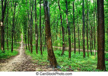 piękny, zielony las