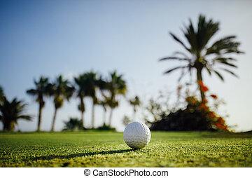 piłka, golf, drzewa, trawa, dłoń, tło, zielony