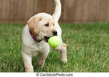 piłka, interpretacja, pracownia, żółty, szczeniak, tenis