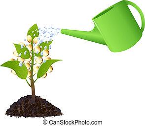 pieniądze roślina, konewka
