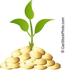 pieniądze roślina, zielony, młody