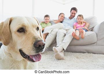 pierwszy plan, żyjący, dom, pieszczoch, leżanka, ich, pokój, posiedzenie, labrador, rodzina, szczęśliwy