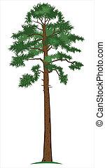pine-tree, wektor