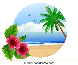 plaża, hawajczyk