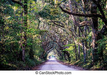 plantacja, kraj, dąb, droga, drzewa
