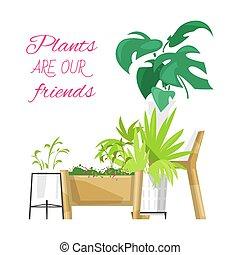 plants., quote., rośliny, dom, monstera, wektor, illustration., przyjaciele, kaktus, rośliny, zielony, succulents, decoration., afisz, ogród, nasz