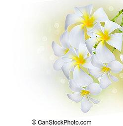 plumeria, kwiaty, border., zdrój, frangipani