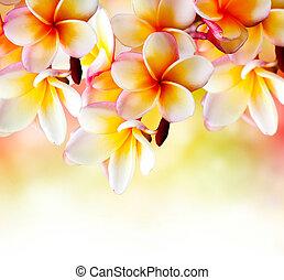 plumeria, tropikalny, flower., brzeg, projektować, zdrój, frangipani