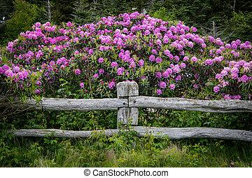 poczta, rododendron, na, płot, kwiaty