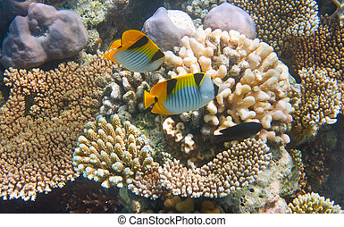 podwodny, indianin, ocean., świat