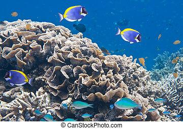 podwodny, indianin, world., ocean.