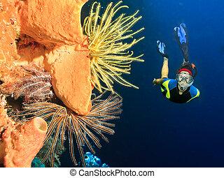 podwodny, nurek