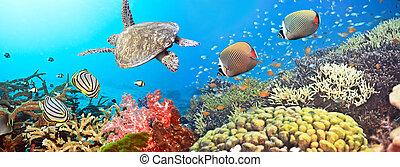 podwodny, panorama