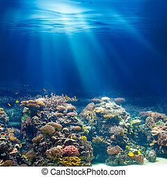 podwodny, tło, koral, ocean, snorkeling, rafa, nurkowanie, albo, morze