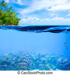 podwodny, tło, powierzchnia, tropikalna woda, morze
