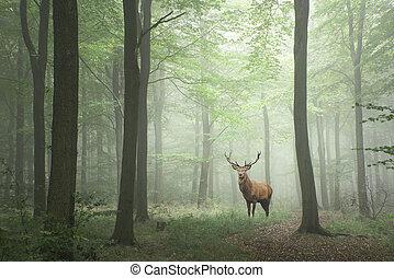 pojęcie, jeleń, fairytale, soczysty, jeleń, wzrost, zielony las, mglisty, wizerunek, krajobraz, czerwony