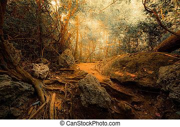 pojęcie, kaprys, las, tropikalny, surrealistyczny, dżungla, tło, tajemniczy, krajobraz, colors.
