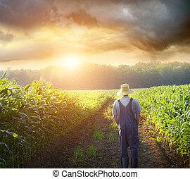 pola, pieszy, zachód słońca, nagniotek, rolnik