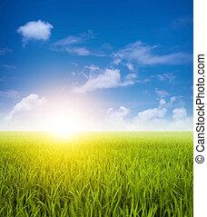 pola, zielony krajobraz, rozdrażnienie