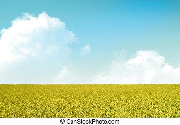 pole, jesień, ryż