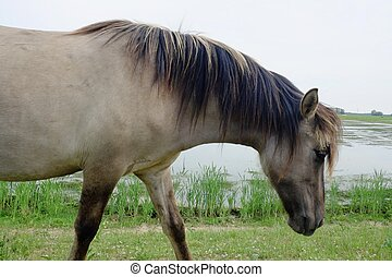 pole, koń, otwarty
